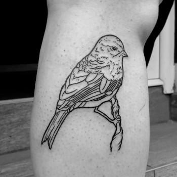 Opus Magnum Tattoo Wien Vogel Spatz Schwalbe  lines fani sofian meherzi filigran filigree lining black cheyenne tatouage τατουά ζ タトゥー 黥
